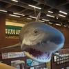 特別展で再訪『埼玉県立自然の博物館』