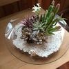 多肉植物のアレンジメント&花時計