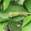 庭にいた虫たち