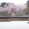 龍安寺を英語で案内しよう!使えるオススメ英語フレーズ20選
