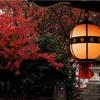 【 #雨の京もまたいとをかし ④】ご覧くださいあるじさまー!この雨量を!!(11/27)【北野天満宮】