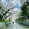 春の向日神社