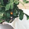 【ロードトリップ出発前】家庭菜園の水やりができない!