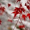 老化による冷えについて・年を取ると寒さがこたえるのはなぜか