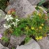 花満載の浅間山系『烏帽子岳2065m』~『湯ノ丸山2103m』 へ