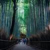京都 嵯峨野・嵐山に行ってきた