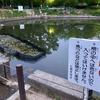 樋之池(兵庫県西宮)