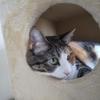 【愛猫日記】毎日アンヌさん#285