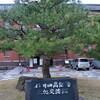 【金沢桜めぐり2011】兼六園・金沢城公園周辺(2011/4/16)