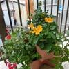 梅雨入り☔植物は元気です