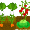 畑の野菜もおじいちゃんの帰宅を待っています。