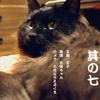 猫ログ:今日の王子 7
