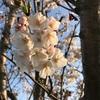 江戸川松戸土手をウォーキングしながら美しい景色を愛でる幸せ
