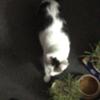 本日は、2月22日(ニャンニャンニャン)の猫の日ということで……