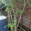 家に引っ越した記念に木を植えたが