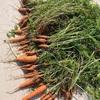 やり直しの菜園・・炎天下で土づくりに2時間格闘しました!〔野菜の土と肥料の豆知識①〕