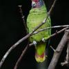 鳥の動物園(3) オウム・インコ類
