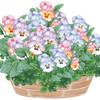 【園芸初心者におすすめ】寄せ植え日記!パンジー&ビオラ多め