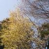花の季節到来! 桜の開花状況などについて