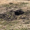 畑で黒猫に遭遇する