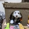 犬多頭飼い日記:Subakoを買い替えました。