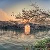 桜観賞に無錫の鼋头渚まで遠征、風景写真-長春橋の桜(2)