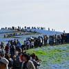 激混みの中、ゴールデンウイークに国営ひたち海浜公園のネモフィラを見に行ってきた話。