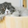 【猫を飼う前に】猫ちゃんの「トイレ」のしつけと用意すべきものを知っておこう
