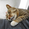 5月後半の #ねこ #cat #猫 その2