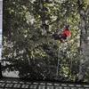 65s  木登りとクレーマー・・・