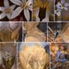 螺旋のグルーブ -開花-