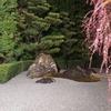 アメリカ人の彼の来日 Day 5 ◆京都/妙心寺の夜間ライトアップに行ってきました◆