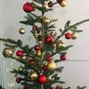 IKEAの生モミの木でクリスマス装飾