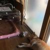 犬の症状と、酸素ハウスの効果は?