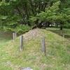 京都御苑の桜松。