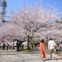 【Nikon Z 50・仙台・勾当台公園駅】錦町公園のソメイヨシノ   April 2021