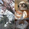 コロナの影響で、犬達もストレスが、、たまるようで、、🐶