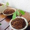 盆栽鉢に、コナラとモミジの植え付け