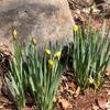 八ケ岳の春にまだ出会えていない・・・。