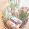 宅配便「ゆうきの実」ある日の有機野菜セット