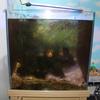 紫陽花コーナー横の海水魚