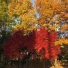 秋の深まりを感じますが、心は晴れません
