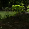 漱石の小説「三四郎」と東大本郷キャンパスの三四郎池
