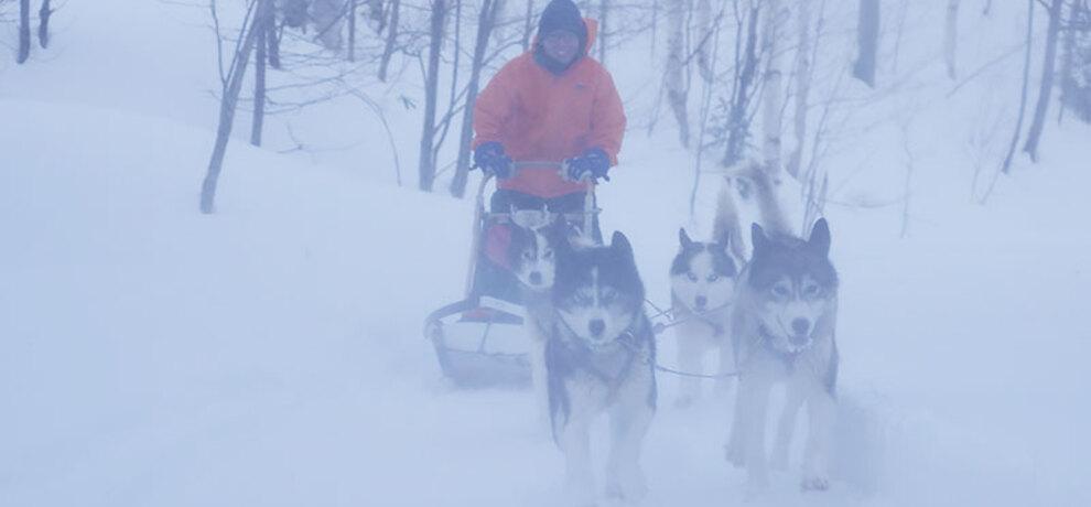 犬が怖いけど、マイナス20℃の世界で犬ぞりにチャレンジしてみた