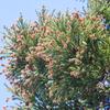 花粉の季節ですね。花粉症対策はしてますか?