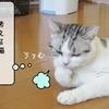 猫の道具 ~またたびの時間~