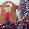 インスタ映えを狙うクリスマスのヤギ