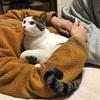 腕の中でぬくぬくな猫〜夏編〜