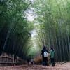 大高緑地の竹林散策路と有松に行ってきた