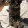 愛猫てんちゃん11